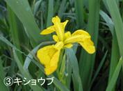 Kisyoubu1_2